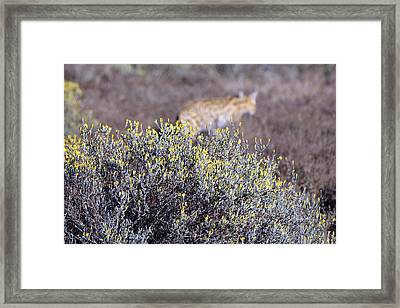 On The Hunt Framed Print by Chris Whittle