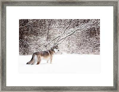 On The Hunt Framed Print by Karen Varnas