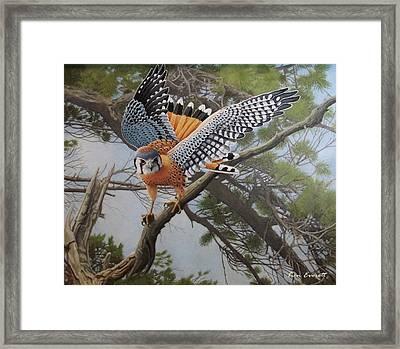 On The Hunt Framed Print by Ken Everett