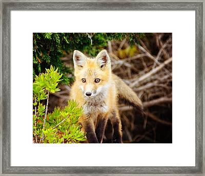 On The Hunt Framed Print by Vicki Jauron