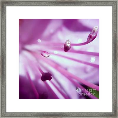 Framed Print featuring the photograph On The Inside by Kerri Farley