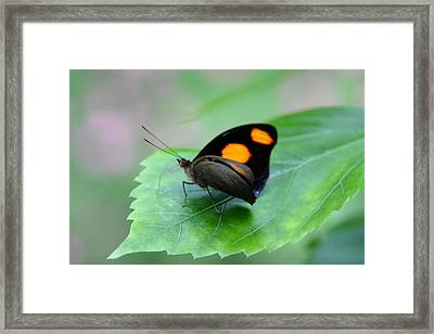 On The Leaf Framed Print