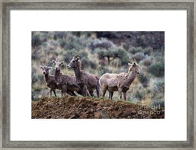 On The Ledge Framed Print by Mike  Dawson