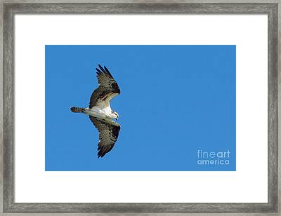 On The Lookout For Fish Framed Print