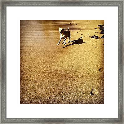 On The Loose Framed Print