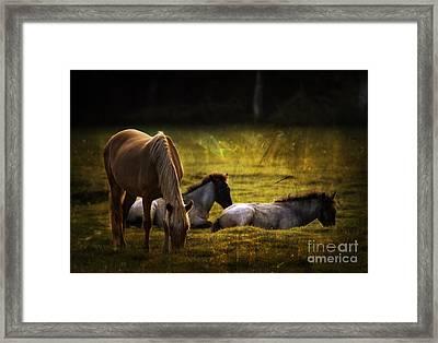 On The Meadow Framed Print by Angel  Tarantella