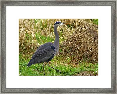 On The Move Framed Print by Jerry Cahill