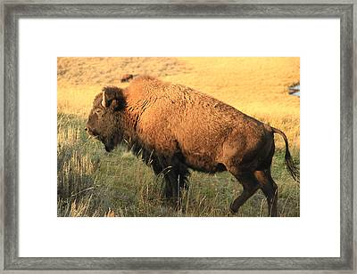 On The Move Framed Print by Marv Russell