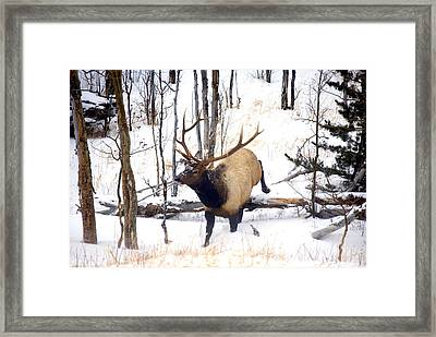 On The Move Framed Print by Mike  Dawson