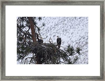 On The Nest Framed Print by Mike  Dawson