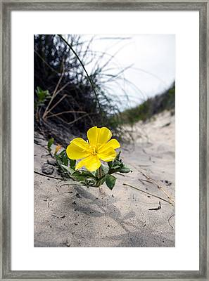 Framed Print featuring the photograph On The Path by Sennie Pierson