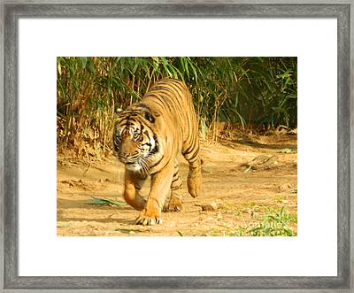 Framed Print featuring the photograph On The Prowl by Emmy Marie Vickers