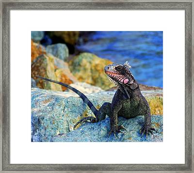 On The Prowl Framed Print by Karen Wiles