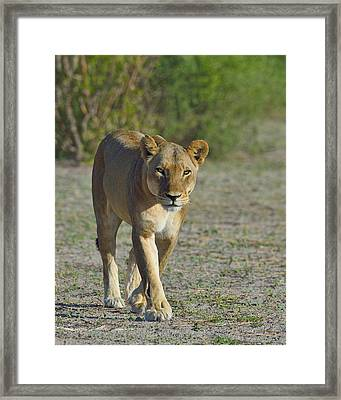 On The Prowl Framed Print by Tony Beck
