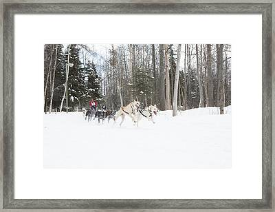 On The Race Trail Framed Print by Tim Grams