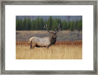 On The Range Framed Print by Daniel Behm