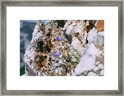 On The Rocks Framed Print by Jane M