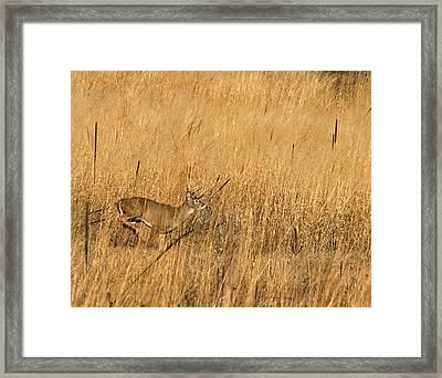 On The Run 3 Framed Print