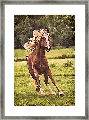 On The Run Framed Print by Priscilla Burgers