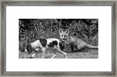 On The Scent Monochrome Framed Print