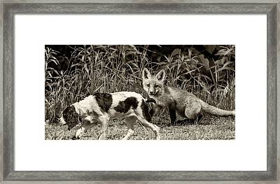 On The Scent Sepia Framed Print