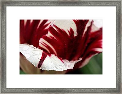 On The Tip Of My Tongue  Framed Print
