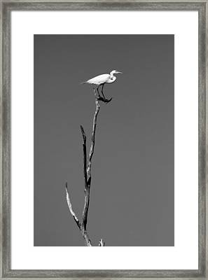 On The Top Of The Island Framed Print by Ellie Teramoto