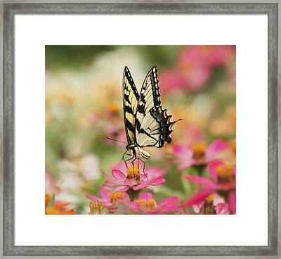 On The Top - Swallowtail Butterfly Framed Print
