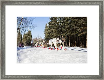 On The Trail To Nome Framed Print by Tim Grams