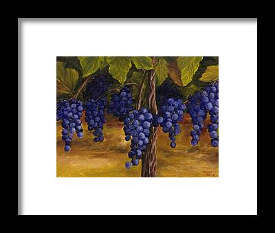 Grape Vine Framed Prints