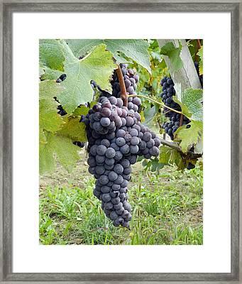 On The Vine I Framed Print by Carolyn Waissman