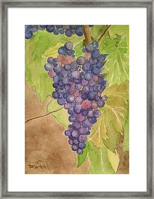 On The Vine Framed Print by M Carlen