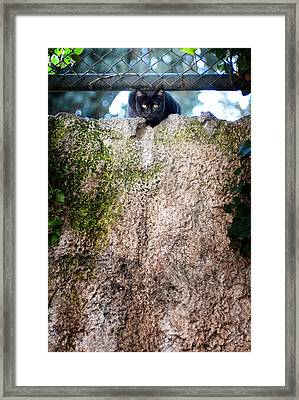 Framed Print featuring the photograph On The Wall by Laura Melis