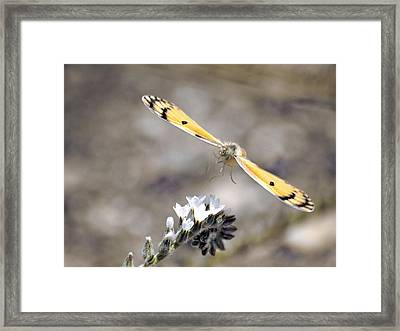 Framed Print featuring the photograph On The Way by Meir Ezrachi