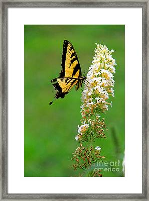 On The Wings Of A Butterfly Framed Print