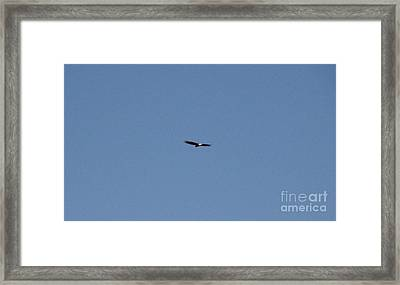 On The Wings Of A Eagle Framed Print by Daniel Henning