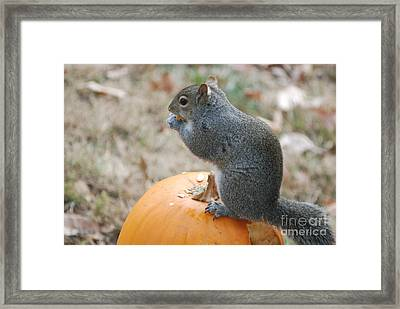 Framed Print featuring the photograph On Top Of The Pumpkin by Mark McReynolds