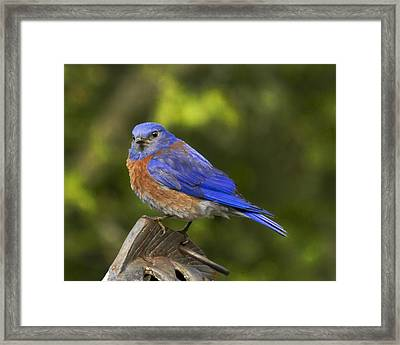 On Top Of The World Framed Print by Jean Noren