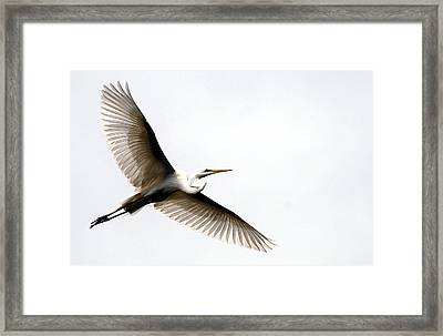 On Translucent Wings Framed Print