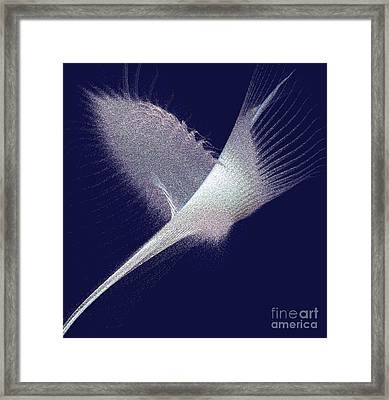 On Wings Of A Dove Framed Print