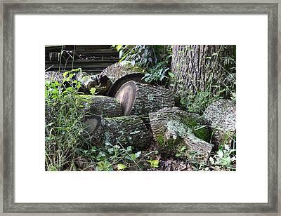 Once A Mighty Oak Framed Print by Bishopston Fine Art