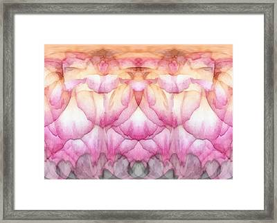Once A Rose Framed Print by Wendy J St Christopher