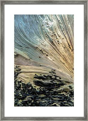 Once A Tree Framed Print by Christy Usilton