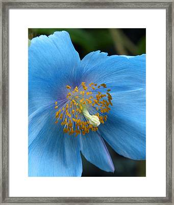 Once In A Blue Moon Framed Print by Cindy McDaniel