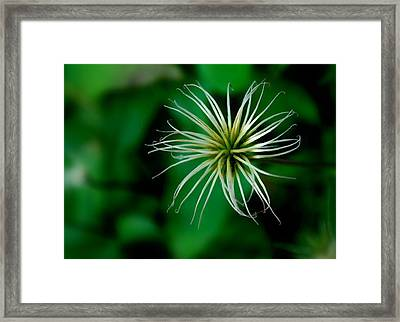 Once In Bloom Framed Print by Mary Beth Landis