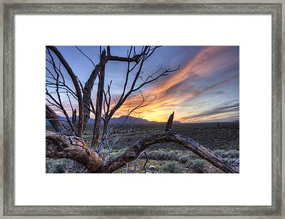 Framed Print featuring the photograph Once Mesquite by Anthony Citro