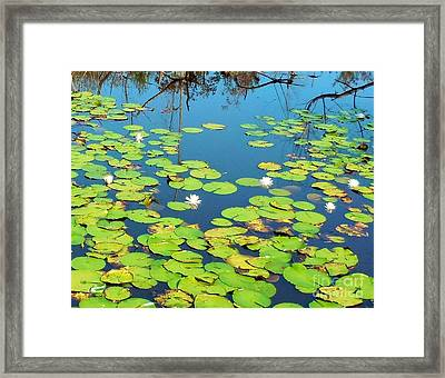 Once Upon A Lily Pad Framed Print by Eloise Schneider
