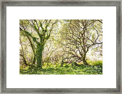 Once Upon A Time Framed Print by Jamie Pham