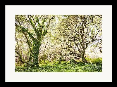 Oak Photographs Framed Prints