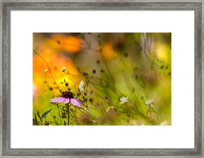 Once Upon A Time There Lived A Flower Framed Print